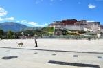 Tibet_RondoneR12