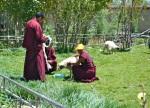 Tibet_RondoneR6